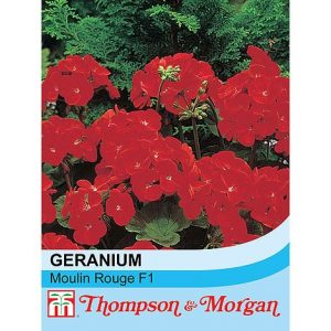 Geranium 'Moulin Rouge' F1 Hybrid at beechmount garden centre