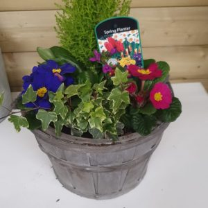 wooden barrel filled container at beecmount garden centre