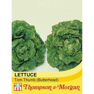 Lettuce 'Tom Thumb' (Butterhead) at beechmount garden centre
