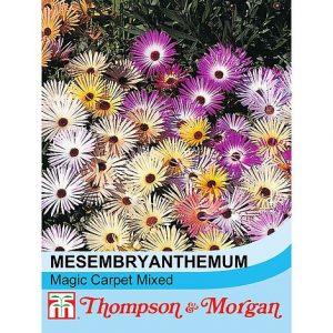 Mesembryanthemum criniflorum 'Magic Carpet Mixed' seeds at beechmount garden centre
