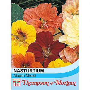 Nasturtium 'Alaska Mixed' at beechmount garden centre