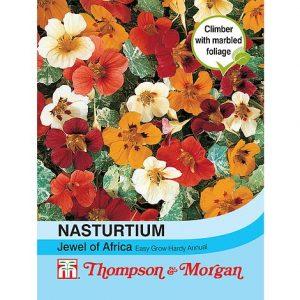 Nasturtium 'Jewel of Africa' at beechmount garden centre