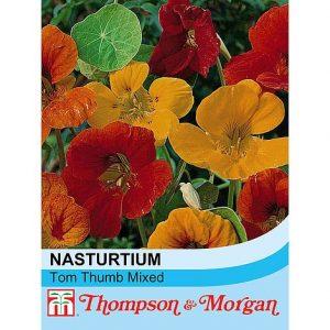 Nasturtium 'Tom Thumb Mixed' at beechmount garden centre