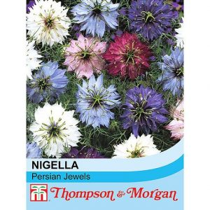 Nigella damascena 'Persian Jewels' at beechmount garden centre