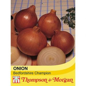 Onion 'Bedfordshire Champion' at beechmount garden centre