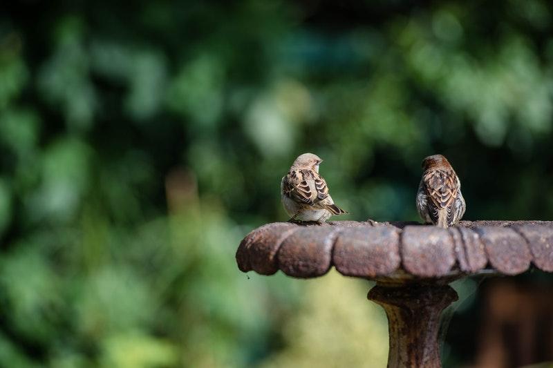 bird seed navan