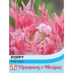 Poppy 'Pink Fizz' at beechmount garden centre
