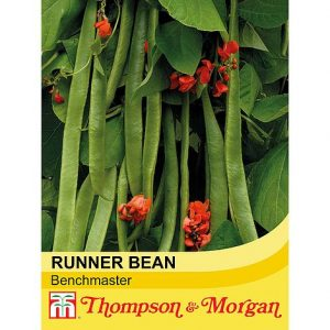 Runner Bean 'Benchmaster' at beechmount garden centre