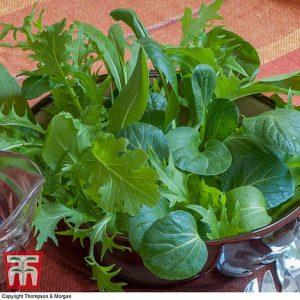 Salad Leaves 'Oriental Mix' at beechmount garden centre