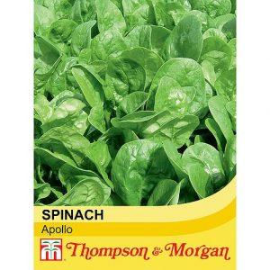 Spinach 'Apollo' at beechmount garden centre