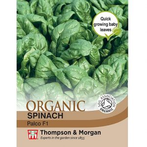 Spinach 'Palco' F1 Hybrid - Organic Seeds at beechmount garden centre
