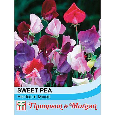 Sweet Pea 'Heirloom Mixed' at beechmount garden centre