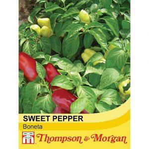 Sweet Pepper 'Boneta' at beechmount garden centre