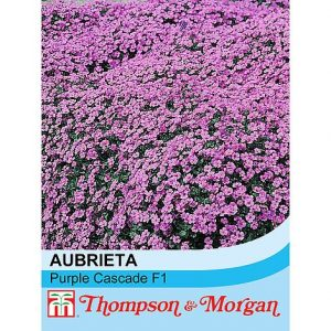 Aubrieta 'Purple Cascade' F1 Hybrid at beechmount garden centre