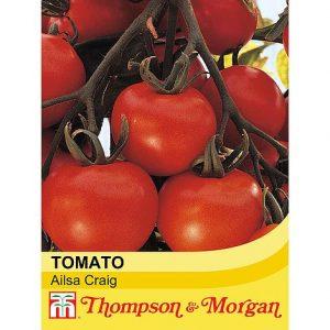 Tomato 'Ailsa Craig' at beechmount garden centre
