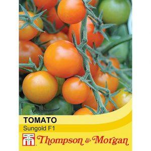 Tomato 'Sungold' F1 Hybrid at beechmount garden centre