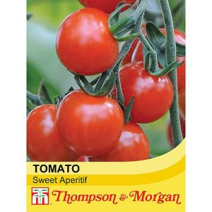 Tomato 'Sweet Aperitif' at beechmount garden centre