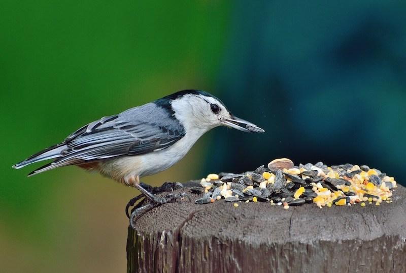 bird feed beechmount garden centre