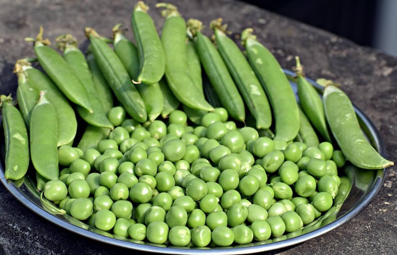 buy vegetable seeds online beechmount garden centre