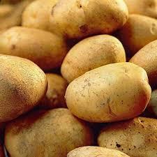 record seed potatoes at beechmount garden centre