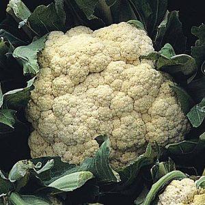 cauliflower all year round start a garden at beechmount garden centre