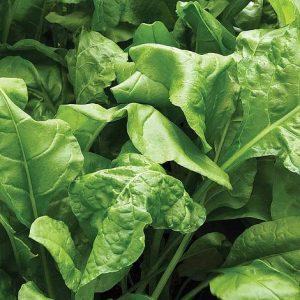 spinach perpetual start a garden at beechmount garden centre