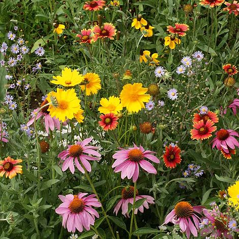 wildflower honey bee flower mix at beechmount garden centre