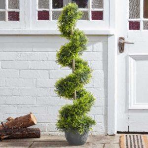 cypress topiary twirl 120cm at beechmount garden centre