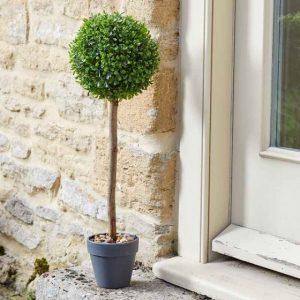 uno topiary tree at beechmount garden centre