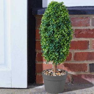 uovo topiary tree at beechmount garden centre